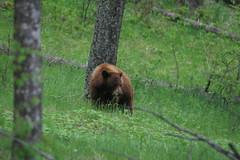 bison_range_20110522_107