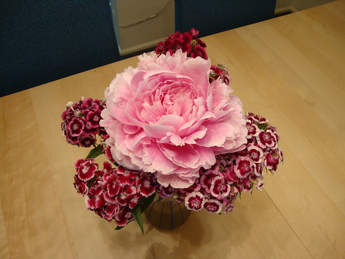 peony and sweet william from Princeton Farmer's Market