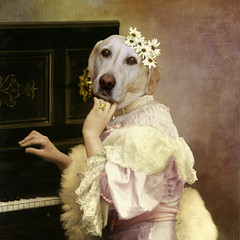 The Bourgeois - La bourgeoise (Martine Roch) Tags: portrait music woman dog cute animal lady funny labrador piano surreal surrealist bourgeois caractre flypapertextures