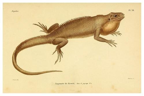 005-Erpétologie générale ou Histoire naturelle complète des reptiles 1834