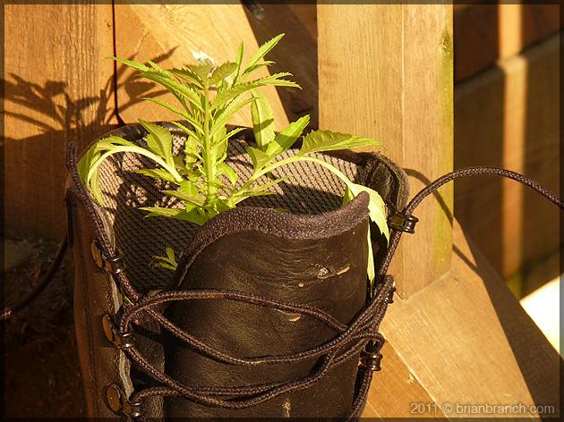 P1150410_garden_boot