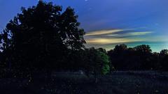 Two minutes of fireflies (Flint-Hill) Tags: fireflies lightningbugs twominutes specnature firefly02flat