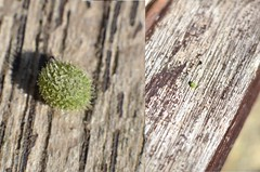 Kenko Comparison of little ball (Dynite) Tags: kenkoextension d7000 50mmafs14