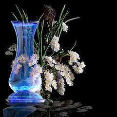 White Black and Blue (jaci XIII) Tags: vaso vidro garrafa flor orquídea vegetal planta naturezamorta azul branco preto vase bottle plant orchid flower deadnature black blue