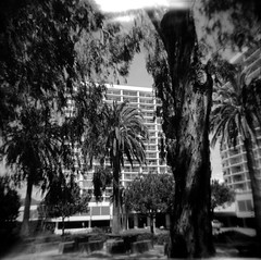 Urban Jungle (imagequagmire) Tags: california 120 mediumformat blackwhite losangeles holga lomo fuji santamonica flash hc110 100 pacificpalisades acros