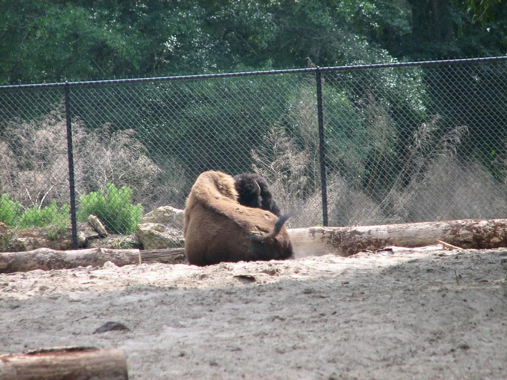 Zoo hookups