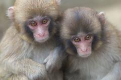 Curiosity (Masashi Mochida) Tags: baby monkey curiosity awaji naturesfinest coth supershot natureselegantshots