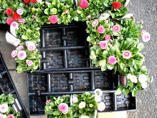 flower tray