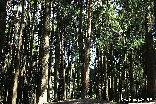 2011阿里山櫻花季晴天版20