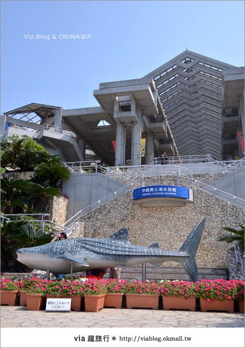 【沖繩景點】美麗海水族館~帶你欣賞美麗又浪漫的海底世界!3