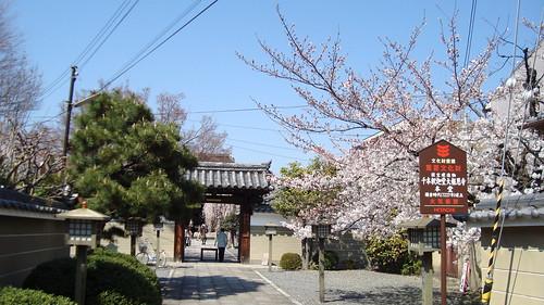 2011/04 千本釈迦堂 #01