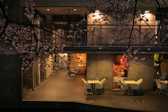 IMG_5049 (Hiro - KokoroPhoto) Tags: pink light up japan night cherry japanese restaurant kyoto blossoms illumination illuminated   sakura cherryblossoms lightup  kiyamachi   2011