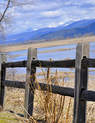 HFF  Fence on the Edge edition (misst.shs) Tags: nature fence spring nikon wetlands splitrail kootenaiwildliferefuge northidaho d90 fencefriday ~~fencefriday~~ fenchfriday fridayfence