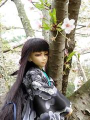 cherry blossom Tsuki (angelynx_prime) Tags: doll cherryblossom sakura bjd min doa msd japanesecostume resindoll dollcosplay
