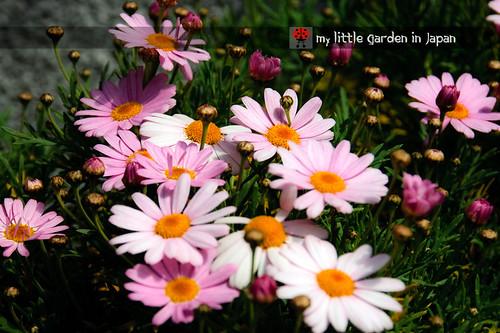 spring-in-tokyo-13