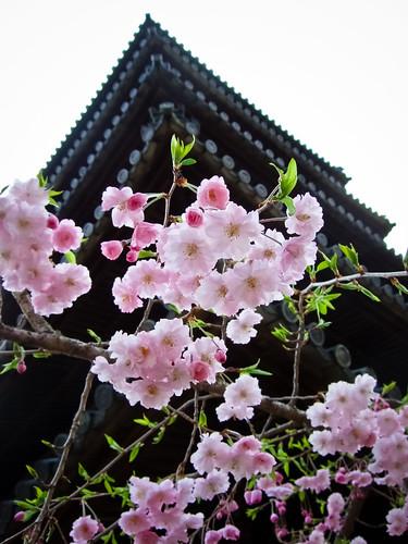 八事興正寺 by monoblogoo