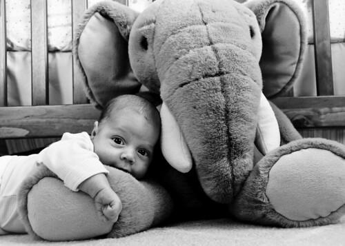 Charlie's Elephant