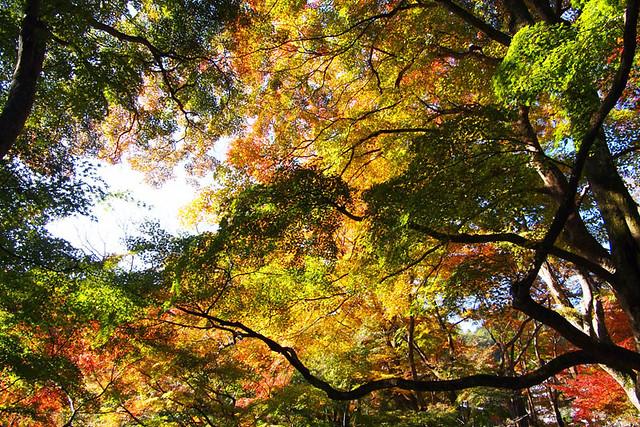 20101120_093042_談山神社
