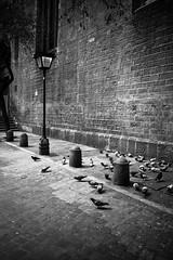 BCN: doves