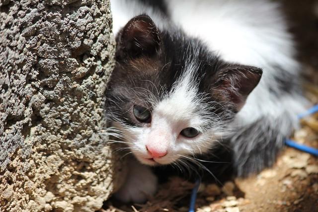 Pluto The New Kitten