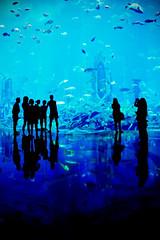The Atlantis - Dubai (Federico Ravassard) Tags: fish water canon aquarium hotel dubai acquarium palm atlantis abu dhabi acqua acquario federico jumeirah 550d ravassard
