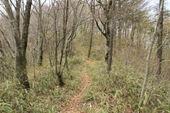 刈り払われた藪道