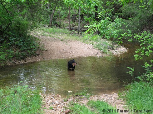 Lucky Buddy Bear in the wet weather creek - Farmgirl Fare