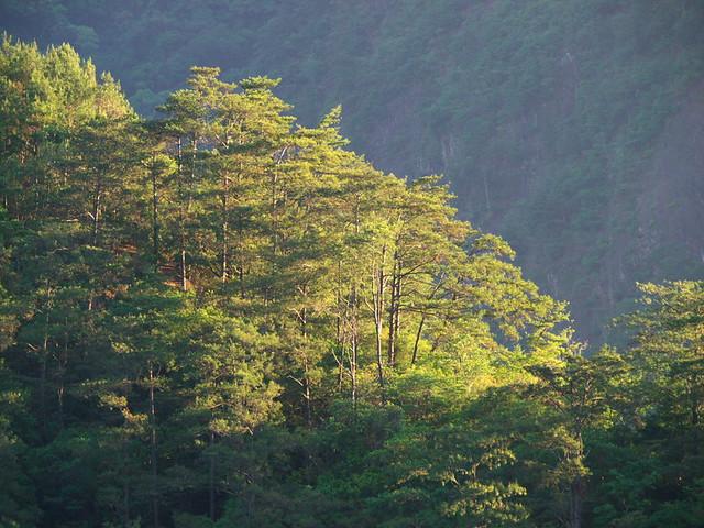 清晨的樹林