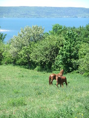 Digby horses