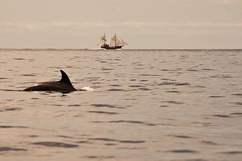 Kayak en los Gigantes con avistamiento de cetáceos