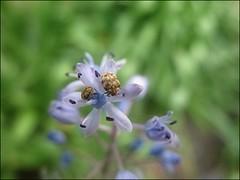 (Tölgyesi Kata) Tags: budapest botanicalgarden füvészkert botanikuskert withcanonpowershota620