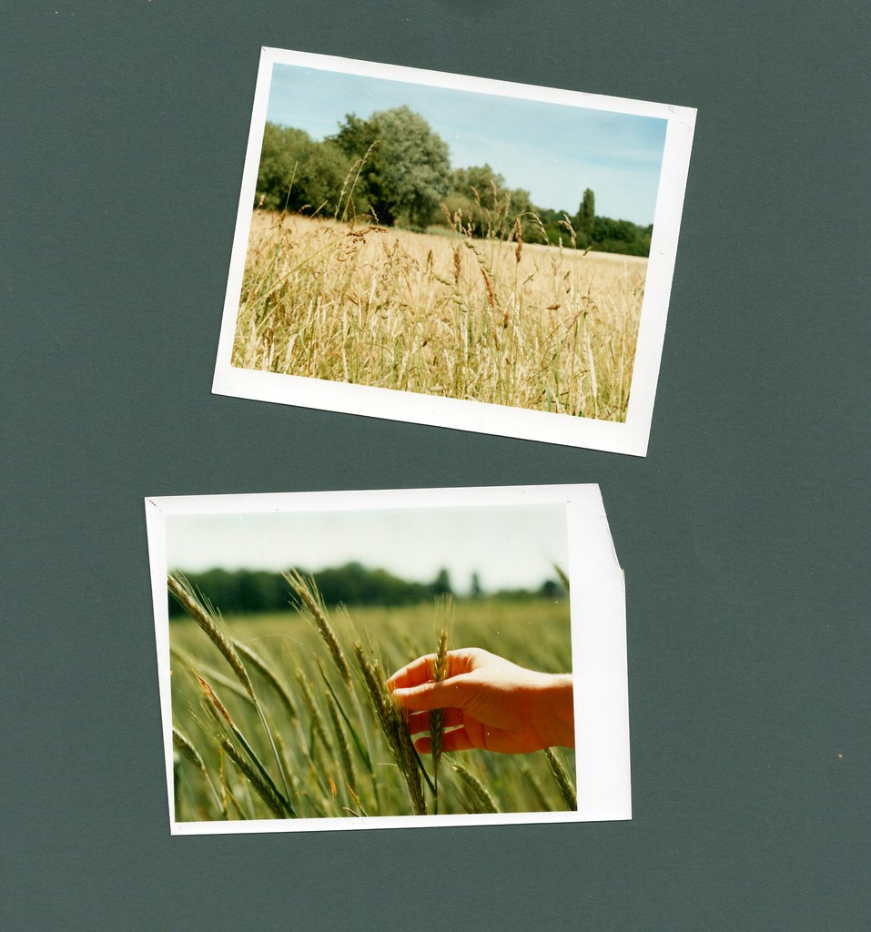 My first (home-printed) color film photos