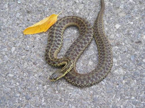 Guard snake