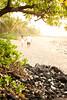 Kress-5006 (Funkyhulagurl Photography) Tags: sunset love beach hawaii couple kealakekua keei kerrikresskeei