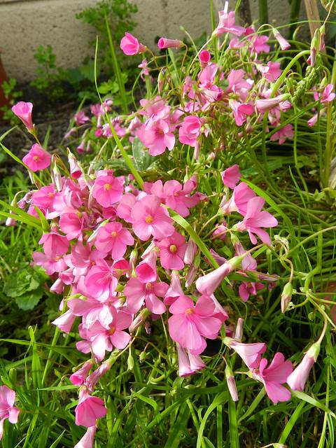 Pretty pink stuff