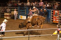 _MG_8398 (maximebergeron_photos) Tags: horse cowboy rodeo cheveaux rodo saintecatherinedelajacquescartier