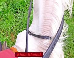 Hospa ( Horse ) !! ^___^ (Khan Khattak) Tags: khankhattak hospa horse horseriding horserider horsemanship horseman horseride whitehorse khanafghan islamabadthebeautiful islamabad isloo kpk khyberpakhtunkhwa khyberpashtunkhwa afghania potohar northernpunjab northernpakistan traveloguenorthernpakistan twincities travelpakistan khan khattak khanscity khattaks khankk khankhattaks