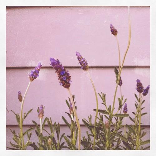 front porch lavendar
