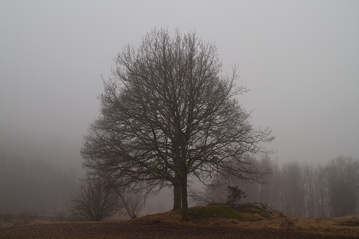 Fog in april