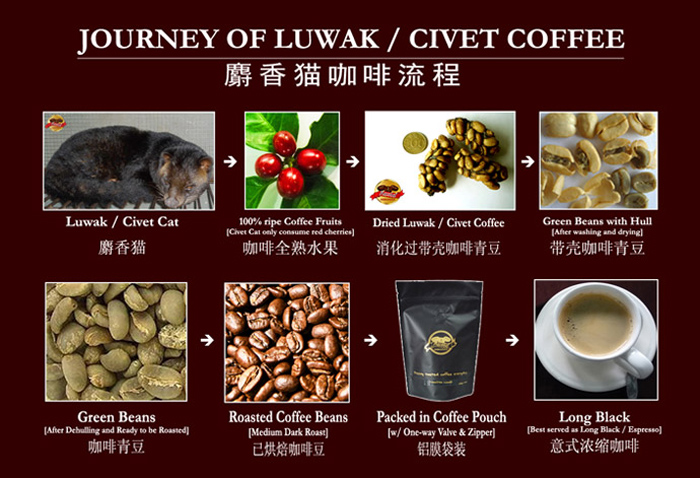 Journey-of-Luwak