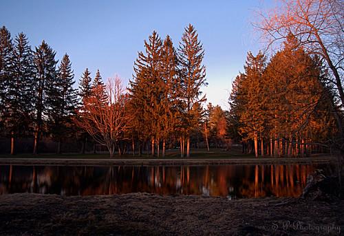 Swan Pond III