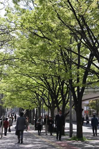 新緑 / Promenade