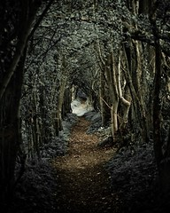 [フリー画像] 自然・風景, 森林, 道, 201104201900