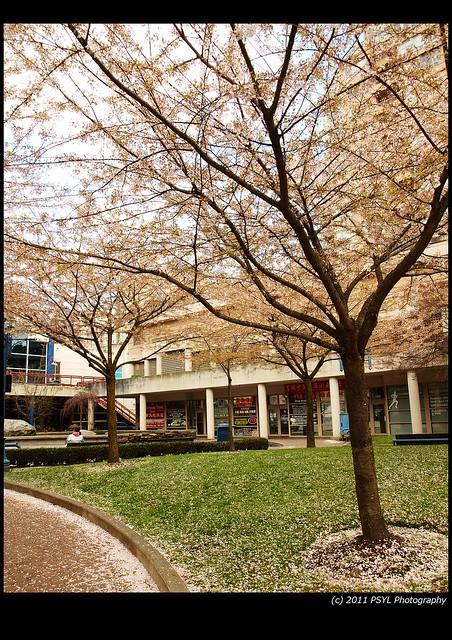 Market Blossom