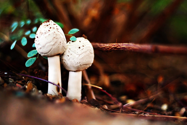 July 29, 2010: Mushrooms
