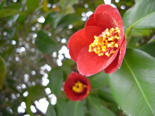 春の花々@明日香村-23