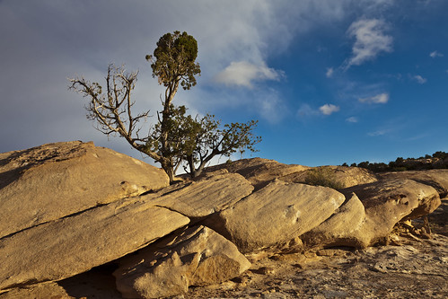 Clouds, Sky, Tree & Sandstone
