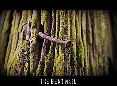 The Bent Nail - Explored 2011-04-19   #309 (tamahaji) Tags: wood old green nail rusty fungus bent