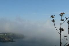 la brume monte (Claudie K) Tags: mer sumac brume cerbre ctevermeille ventmarin claudiek