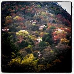 今年は、ヤマザクラの開花が、シデ類の開花と重なって、山は色とりどり。秋の紅葉とは違って、春色。もっと上手く写真撮りたいなあ。